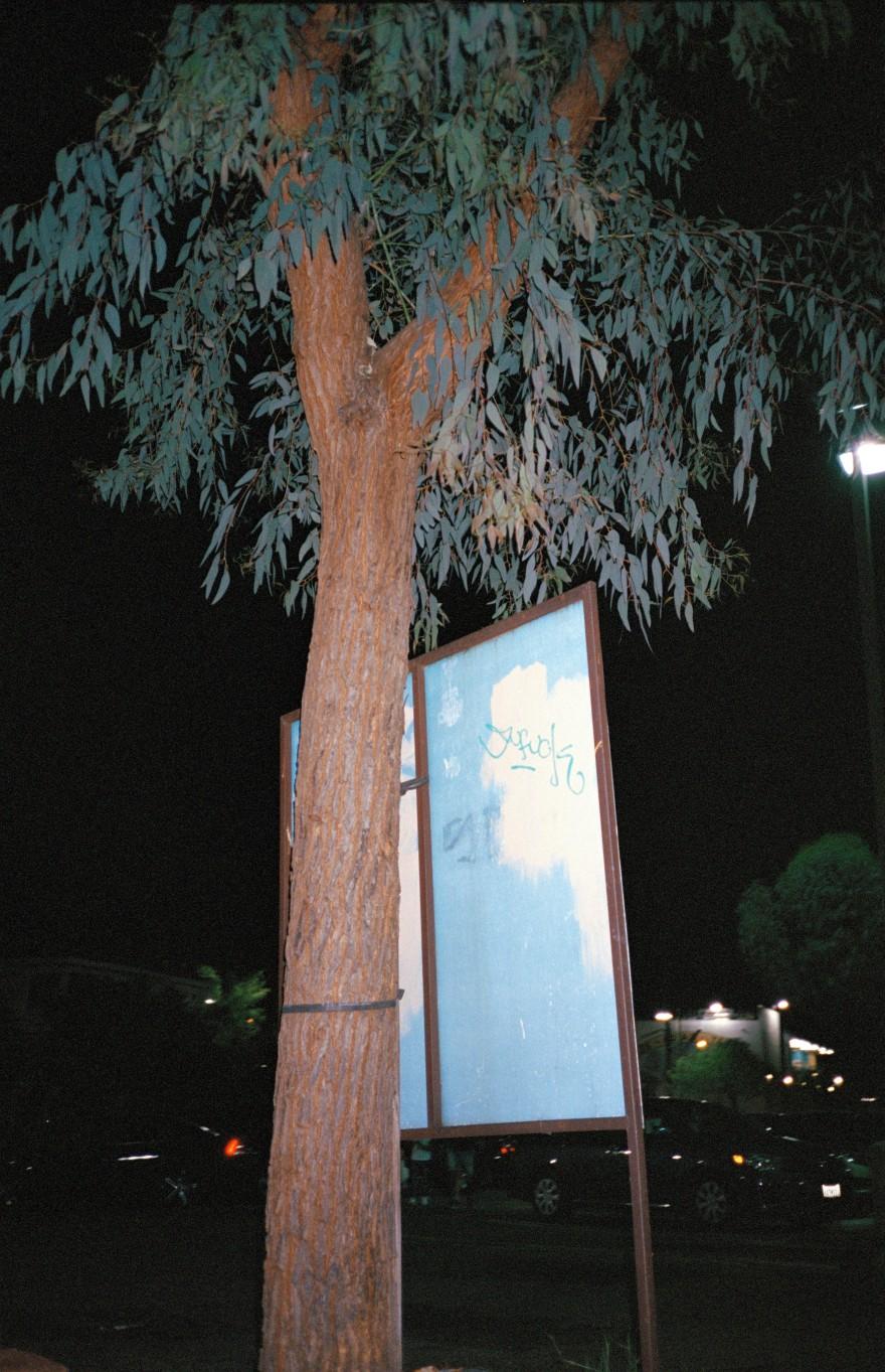 arbol con lamina azul