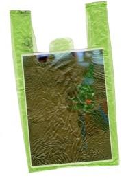 ranita bolsa verde
